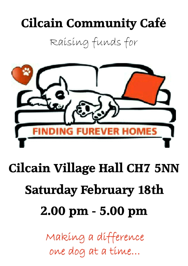 finding-furever-homes-feb-2017